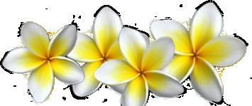 Oahu LASIK